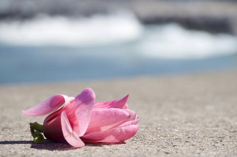Rosa en el mar DSC_1112