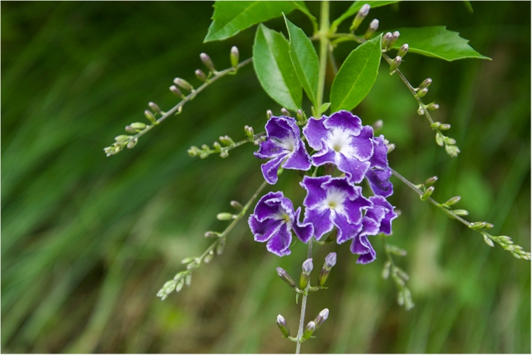 Flores DSC_0041