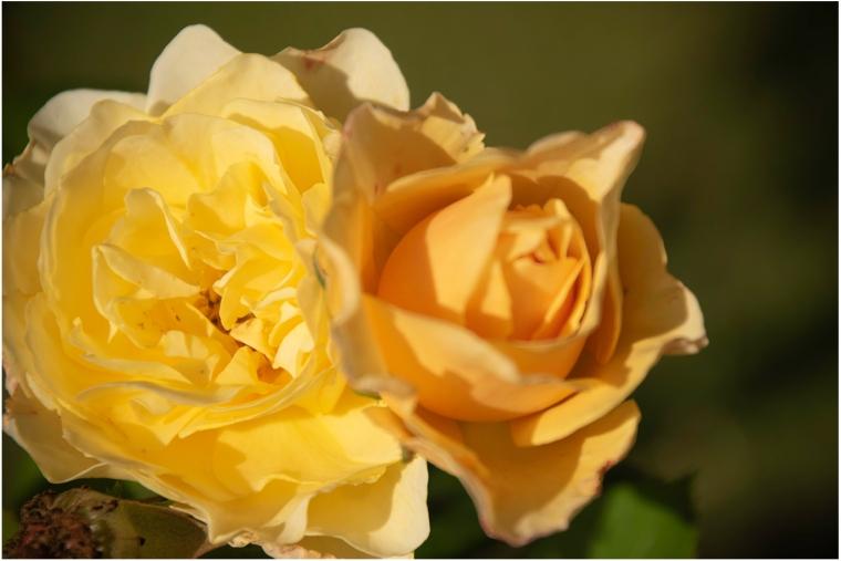 Flores DSC_0177