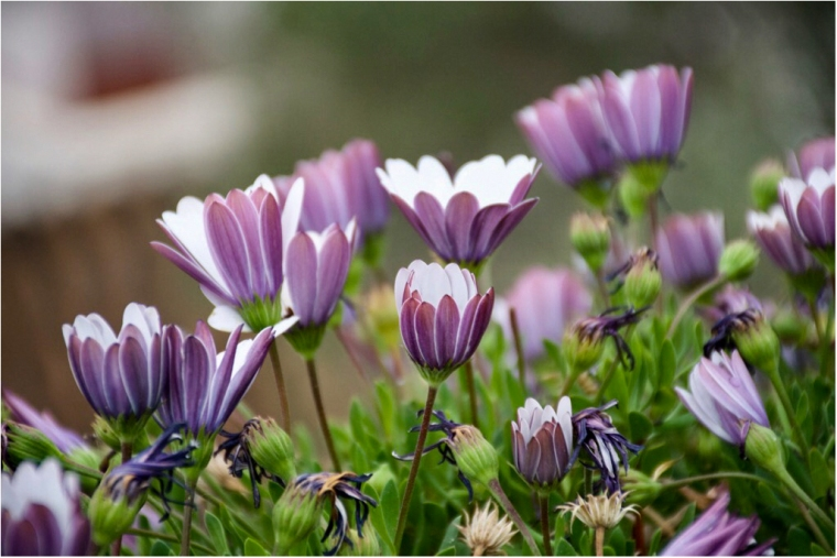 Flores FOJB3199